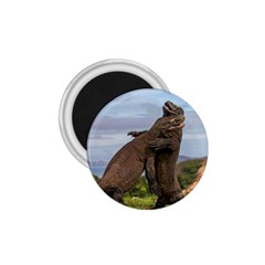 Komodo Dragons Fight 1 75  Magnets
