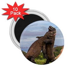 Komodo Dragons Fight 2 25  Magnets (10 Pack)