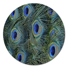 Peacock Feathers Blue Bird Nature Magnet 5  (round)