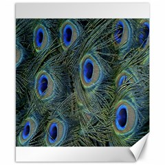 Peacock Feathers Blue Bird Nature Canvas 8  X 10