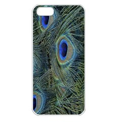 Peacock Feathers Blue Bird Nature Apple Iphone 5 Seamless Case (white)