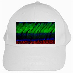 Cells Rainbow White Cap