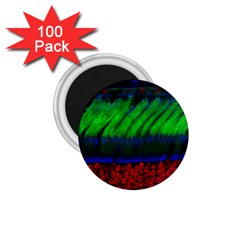Cells Rainbow 1 75  Magnets (100 Pack)