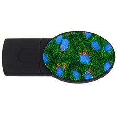 Fluorescence Microscopy Green Blue Usb Flash Drive Oval (4 Gb)