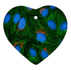 Fluorescence Microscopy Green Blue Heart Ornament (two Sides)