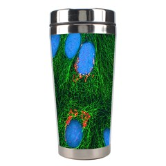 Fluorescence Microscopy Green Blue Stainless Steel Travel Tumblers