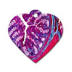Histology Inc Histo Logistics Incorporated Masson s Trichrome Three Colour Staining Dog Tag Heart (one Side)