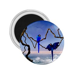 Wonderful Blue  Parrot Looking To The Ocean 2 25  Magnets