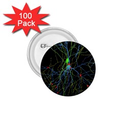 Synaptic Connections Between Pyramida Neurons And Gabaergic Interneurons Were Labeled Biotin During 1 75  Buttons (100 Pack)