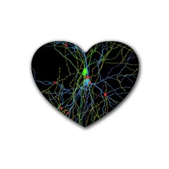 Synaptic Connections Between Pyramida Neurons And Gabaergic Interneurons Were Labeled Biotin During Rubber Coaster (heart)