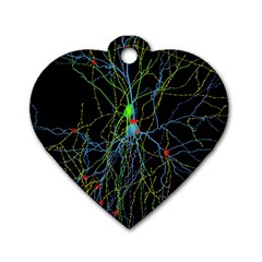 Synaptic Connections Between Pyramida Neurons And Gabaergic Interneurons Were Labeled Biotin During Dog Tag Heart (one Side)