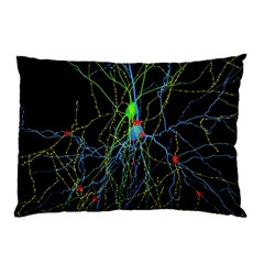 Synaptic Connections Between Pyramida Neurons And Gabaergic Interneurons Were Labeled Biotin During Pillow Case