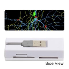 Synaptic Connections Between Pyramida Neurons And Gabaergic Interneurons Were Labeled Biotin During Memory Card Reader (stick)