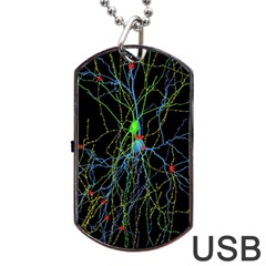 Synaptic Connections Between Pyramida Neurons And Gabaergic Interneurons Were Labeled Biotin During Dog Tag Usb Flash (two Sides)