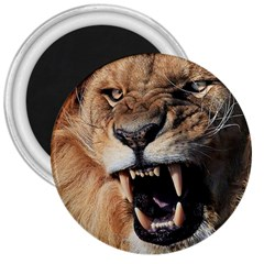 Male Lion Angry 3  Magnets