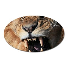 Male Lion Angry Oval Magnet