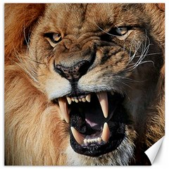 Male Lion Angry Canvas 12  X 12
