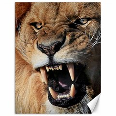 Male Lion Angry Canvas 12  X 16