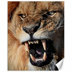 Male Lion Angry Canvas 16  X 20