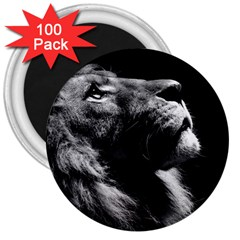 Male Lion Face 3  Magnets (100 Pack)