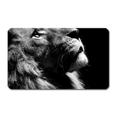 Male Lion Face Magnet (rectangular)