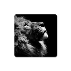 Male Lion Face Square Magnet