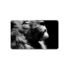 Male Lion Face Magnet (name Card)