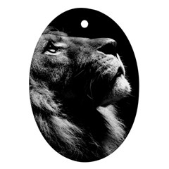 Male Lion Face Oval Ornament (two Sides)