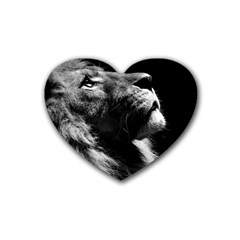 Male Lion Face Heart Coaster (4 Pack)