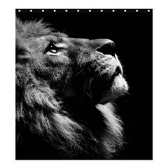 Male Lion Face Shower Curtain 66  X 72  (large)