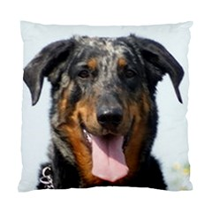 Harlequin Beauceron Standard Cushion Case (one Side)