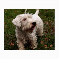 Sealyham Terrier Full Small Glasses Cloth (2 Side)