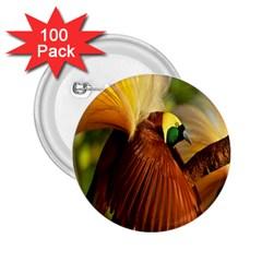 Birds Paradise Cendrawasih 2 25  Buttons (100 Pack)