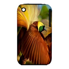 Birds Paradise Cendrawasih Iphone 3s/3gs