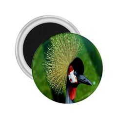 Bird Hairstyle Animals Sexy Beauty 2 25  Magnets