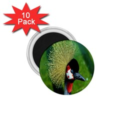 Bird Hairstyle Animals Sexy Beauty 1 75  Magnets (10 Pack)