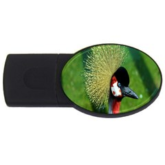 Bird Hairstyle Animals Sexy Beauty Usb Flash Drive Oval (2 Gb)