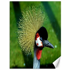 Bird Hairstyle Animals Sexy Beauty Canvas 36  X 48