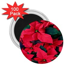 Red Poinsettia Flower 2 25  Magnets (100 Pack)