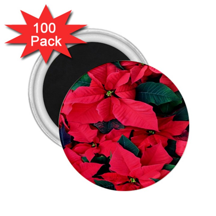 Red Poinsettia Flower 2.25  Magnets (100 pack)