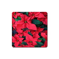 Red Poinsettia Flower Square Magnet