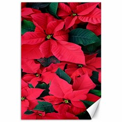 Red Poinsettia Flower Canvas 12  X 18