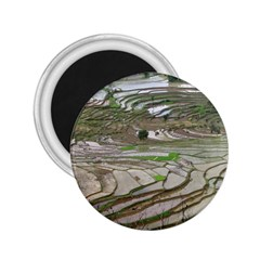 Rice Fields Terraced Terrace 2 25  Magnets