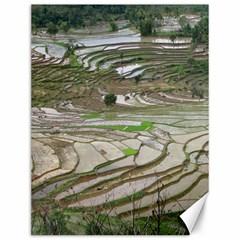 Rice Fields Terraced Terrace Canvas 12  X 16