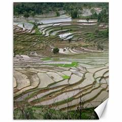 Rice Fields Terraced Terrace Canvas 11  X 14