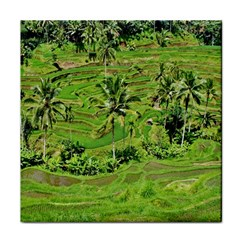 Greenery Paddy Fields Rice Crops Tile Coasters
