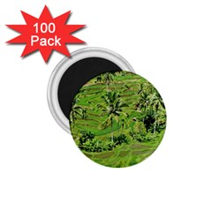 Greenery Paddy Fields Rice Crops 1 75  Magnets (100 Pack)