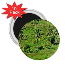 Greenery Paddy Fields Rice Crops 2 25  Magnets (10 Pack)
