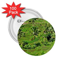 Greenery Paddy Fields Rice Crops 2 25  Buttons (100 Pack)