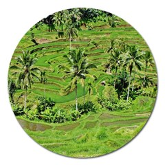 Greenery Paddy Fields Rice Crops Magnet 5  (round)